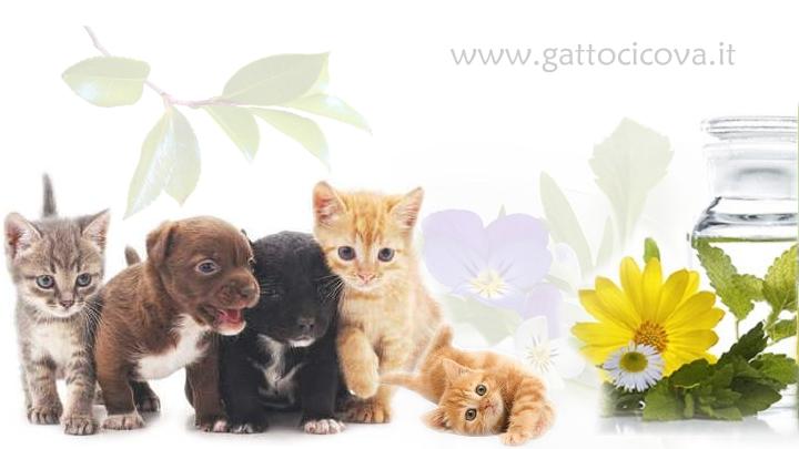 Cure Naturali IBD Gatto Cane
