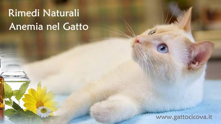 Anemia felina nel gatto