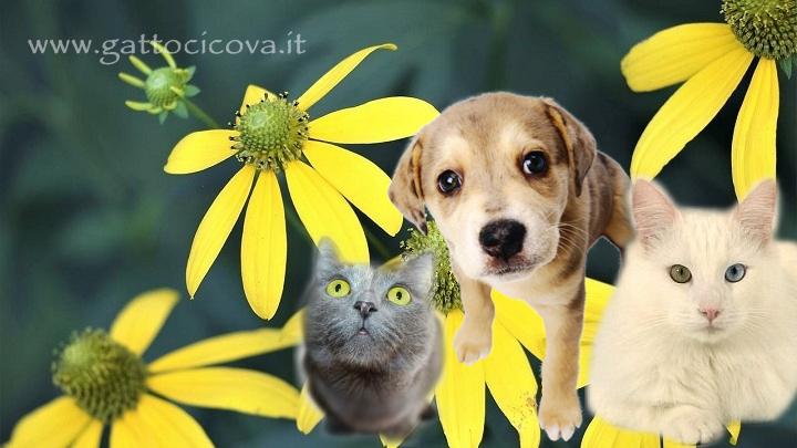 Arnica montana gatto cane