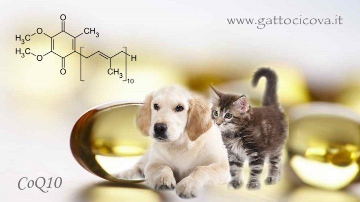 Coenzima Q10 gatto cane