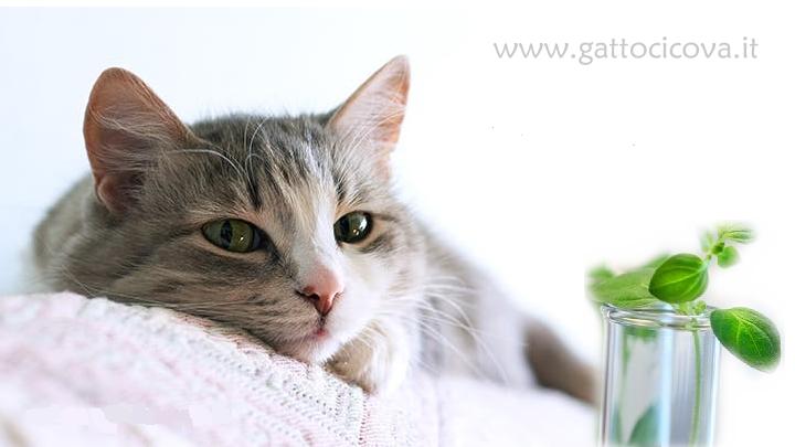 Dermatite nel gatto cure naturali