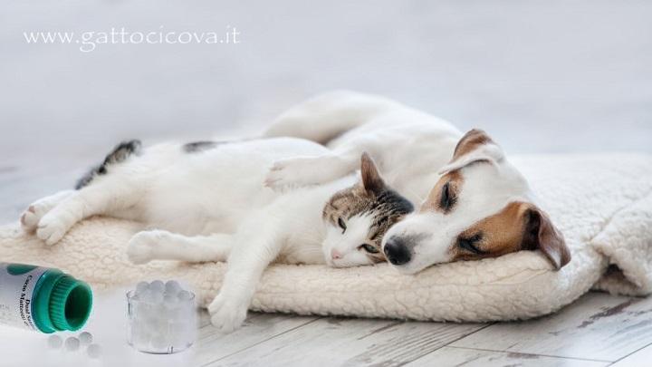 Febbre gatto cane