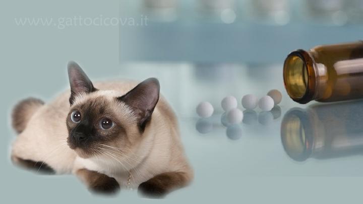 Granuloma Eosinofilico Gatto Senza Farmaci