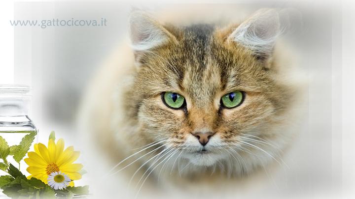Immunodeficienza Felina Gatto FIV Positivo