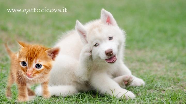 Micosi gatto cane