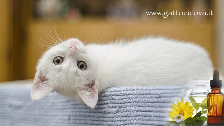 Rinotracheite felina gatto