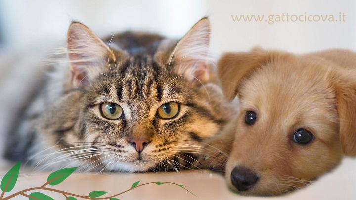 Tumore gatto cane